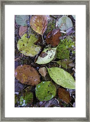 2015 Note Di Autunno #05 Framed Print