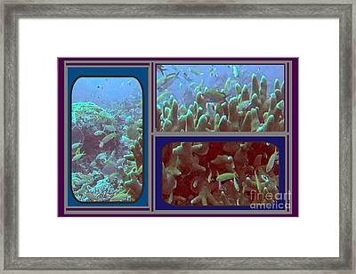 2015 Periscope Perspective Gallery Underwater Coral Reef Vegitation Photography In Landscape Format Framed Print