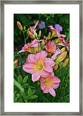 2015 Summer At The Garden Daylilies 1 Framed Print