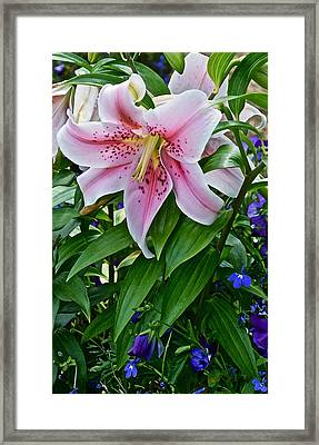 2015 Summer At The Garden Event Garden Lily 3 Framed Print