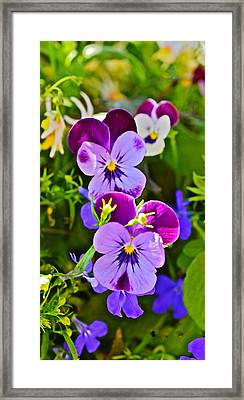 2015 Summer's Eve At The Garden Pansy Totem Framed Print