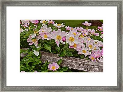 2015 Summer's Eve Neighborhood Garden Front Yard Peonies 3 Framed Print