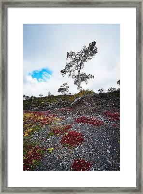 20150516144211fla24528-master Framed Print by Fernando Lopez Arbarello