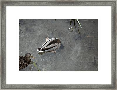 2016 Germano Reale Framed Print