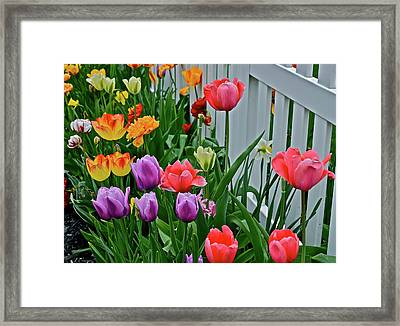 Framed Print featuring the photograph 2018 Acewood Tulips Against The White Fence 2 by Janis Nussbaum Senungetuk