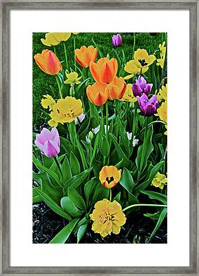 Framed Print featuring the photograph 2018 Acewood Tulips Galore by Janis Nussbaum Senungetuk