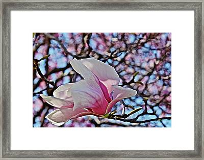 Framed Print featuring the photograph 2018 Vernon Magnolias 2 by Janis Nussbaum Senungetuk