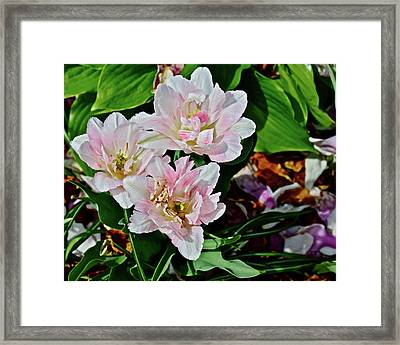 Framed Print featuring the photograph 2018 Vernon Tulips 1 by Janis Nussbaum Senungetuk