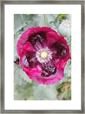 Coastal Flowers Framed Print
