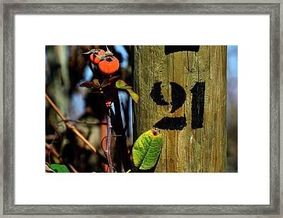 21 Framed Print by Fernando Lopez Lago
