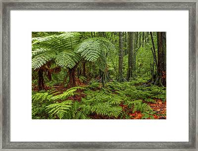 Framed Print featuring the photograph Jungle by Les Cunliffe