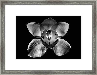 218 Fixed Background Framed Print by Matti Ollikainen