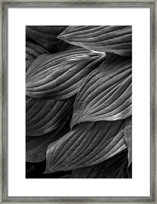Hosta Framed Print by Robert Ullmann