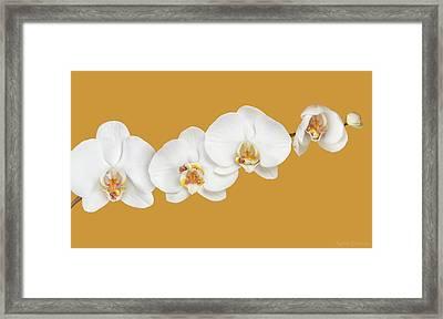 Moth Orchid Nursery Framed Print