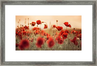 Summer Poppy Meadow Framed Print by Nailia Schwarz