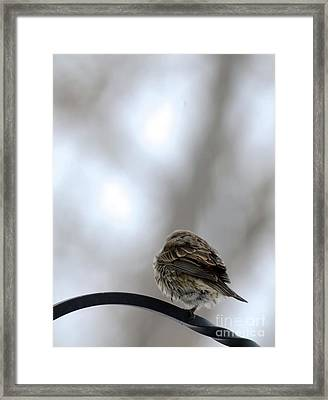 25 Degrees Framed Print
