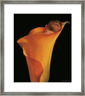 Jacob In A Call Lily Framed Print