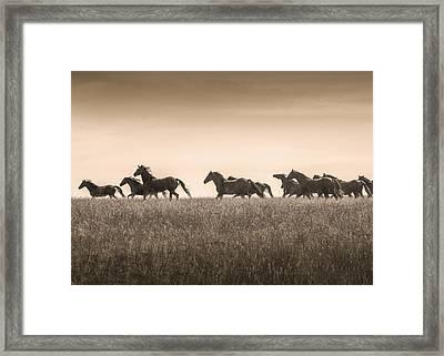 #2564 - Mortana Morgans Framed Print