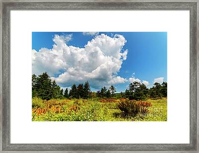 Cranberry Glades Botanical Area Framed Print