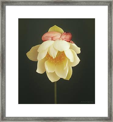 Lotus Bud Framed Print
