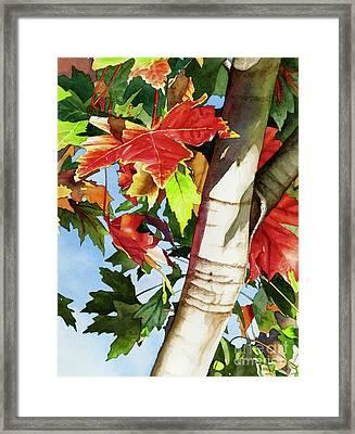 #275 Maple In Rocklin Framed Print