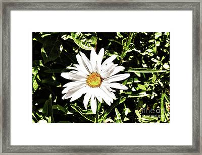278 - Flower Series 1.4 Hdr Framed Print by Chris Berry