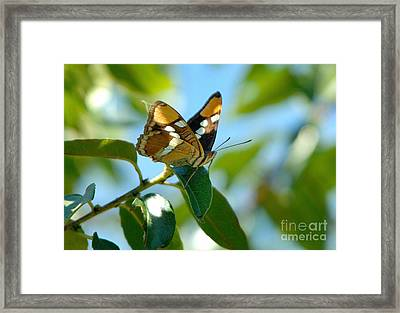 Butterfly Framed Print by Marc Bittan