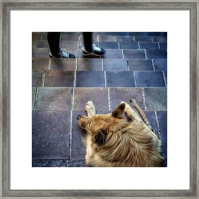 2feet And 2vak #dog #animal #pet Framed Print