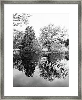Two Trees Reflected - Bw Framed Print by Marilyn Wilson