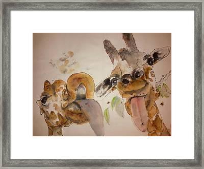 A Camel Story Album Framed Print
