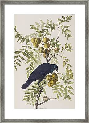 American Crow Framed Print by John James Audubon