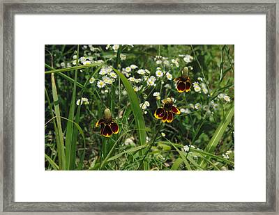 3 Amigos Mexican Hats Framed Print by Robyn Stacey