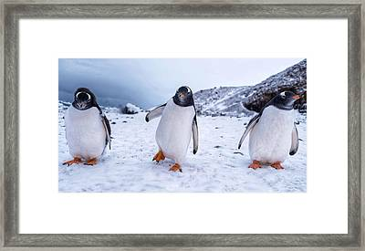 Framed Print featuring the photograph 3 Amigos by Rand