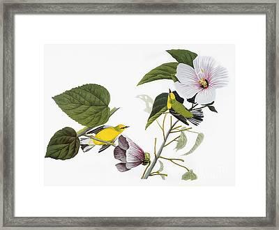 Audubon: Warbler, (1827-38) Framed Print by Granger