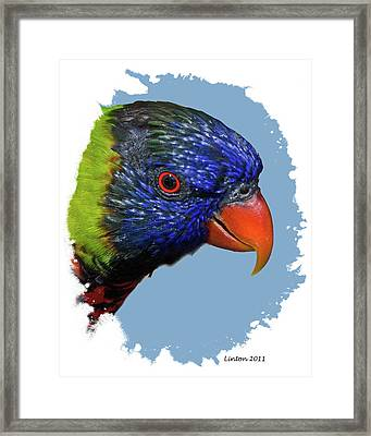 Australian Lorikeet Framed Print by Larry Linton