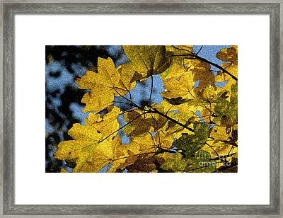Framed Print featuring the photograph Autumn Leaves by Jean Bernard Roussilhe