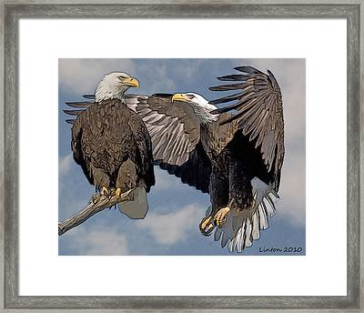 Bald Eagle Pair Framed Print