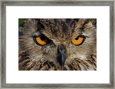 Framed Print featuring the photograph Bengal Eagle Owl by JT Lewis