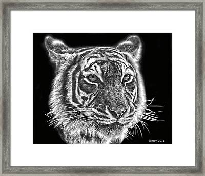 Bengal Tiger Framed Print by Larry Linton