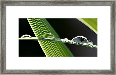 Big Rain Drops On Leaf Framed Print