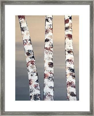 3 Birch Trees Framed Print
