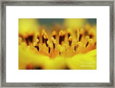 Bloom Framed Print by Michal Boubin
