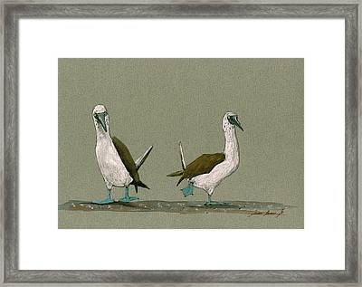 Blue Footed Boobies Framed Print