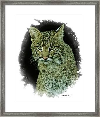 Bobcat Framed Print by Larry Linton