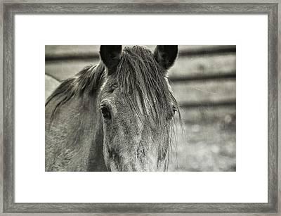 Buckskin Black And White Framed Print by JAMART Photography