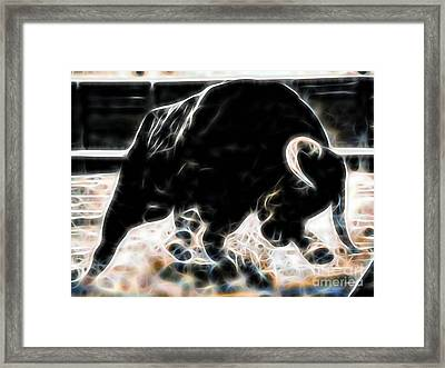 Bull Collection Framed Print