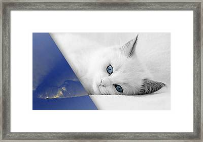 Cat Collection Framed Print by Marvin Blaine
