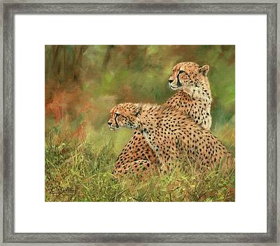 Cheetahs Framed Print by David Stribbling