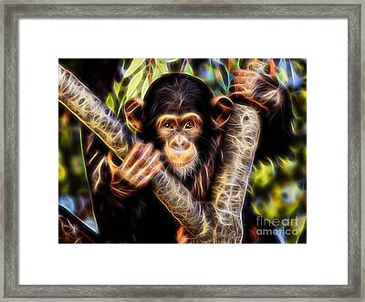 Chimpanzee Collection Framed Print by Marvin Blaine