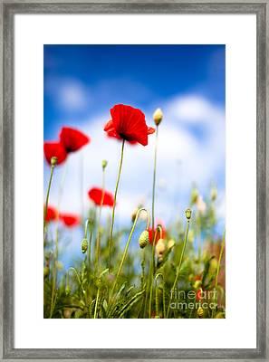 Corn Poppy Flowers Framed Print by Nailia Schwarz